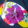 Farbpalette mit Blüten
